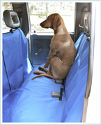 Pet Stains Removal from Upholsteries in CA